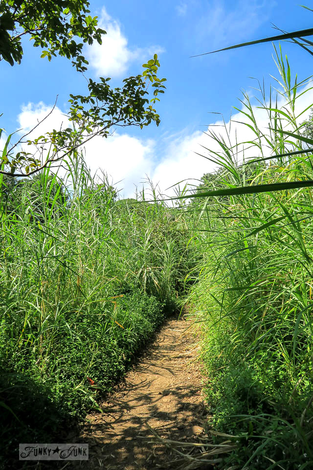 The flat field paths along the tall grass of the Pipiwai Trail leading through the bamboo forest during our Road to Hana trip in Maui, Hawaii - full story on funkyjunkinteriors.net