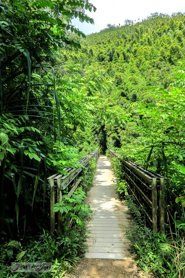 The entry into the bamboo forest along the Pipiwai Trail leading through the bamboo forest during our Road to Hana trip in Maui, Hawaii - full story on funkyjunkinteriors.net