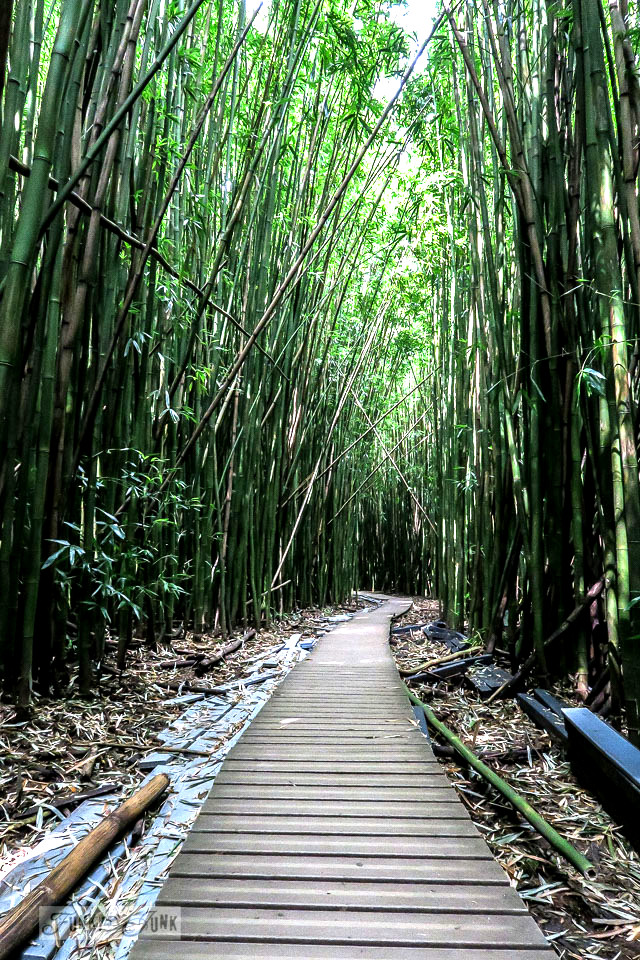 The planked pathways of the Pipiwai Trail leading through the bamboo forest during our Road to Hana trip in Maui, Hawaii - full story on funkyjunkinteriors.net
