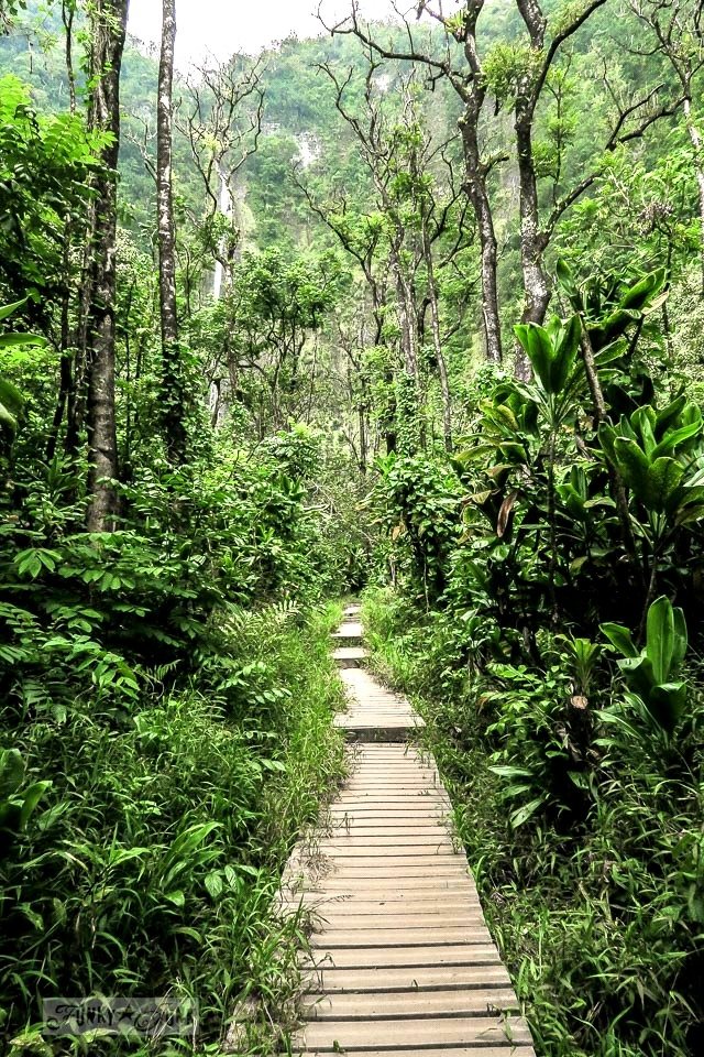 The Pipiwai Trail is a must-visit long walk that meanders through meadows, a bamboo forest, and jungle, ending in a gorgeous waterfall. Located along the Road to Hana, in Maui, Hawaii