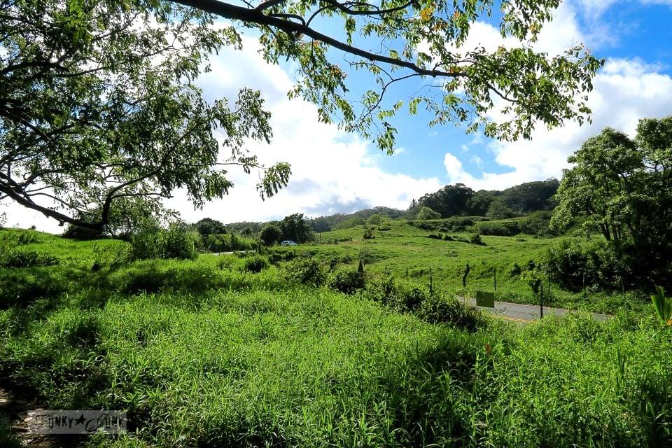 The scenic countryiside along The Road To Hana, Maui, Hawaii | funkyjunkinteriors.net