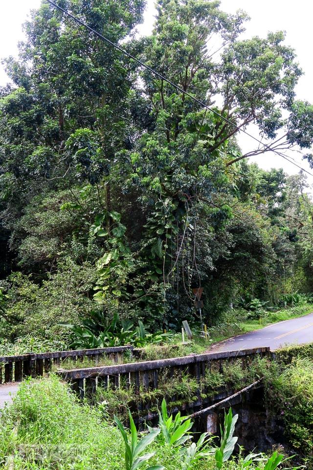 Old bridges along jungle growth along the Road to Hana, Maui, Hawaii | funkyjunkinteriors.net