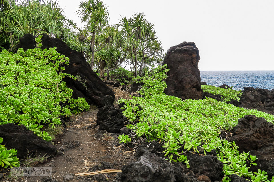 The unbelievably stunning Waianapanapa State Park walking trail, home of the black sand beach, along the Road to Hana, Maui, Hawaii | funkyjunkinteriors.net