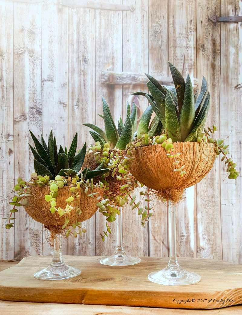 Wine glass coconut planters by A Crafty Mix, featured on Funky Junk Interiors