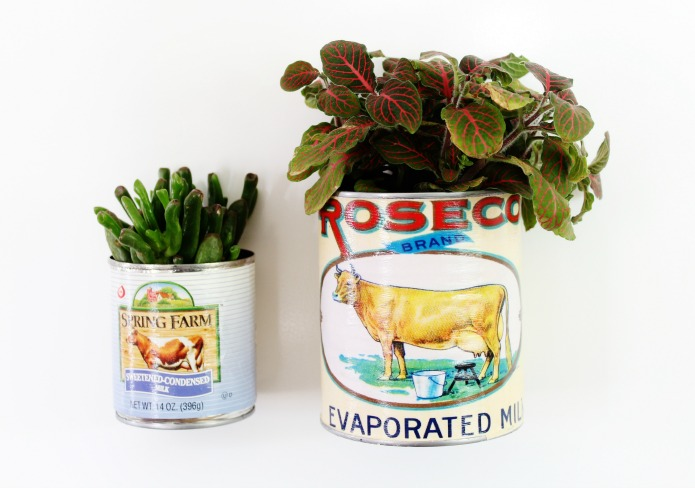 Farmhouse cow themed tin can planters and storage by Knick of Time, featured on Funky Junk Interiors
