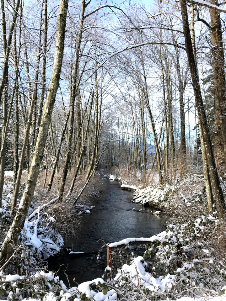 A snowy river view at Peach Trail along the Vedder River Rotary Trail in Chilliwack, BC Canada \ funkyjunkinteriors.net