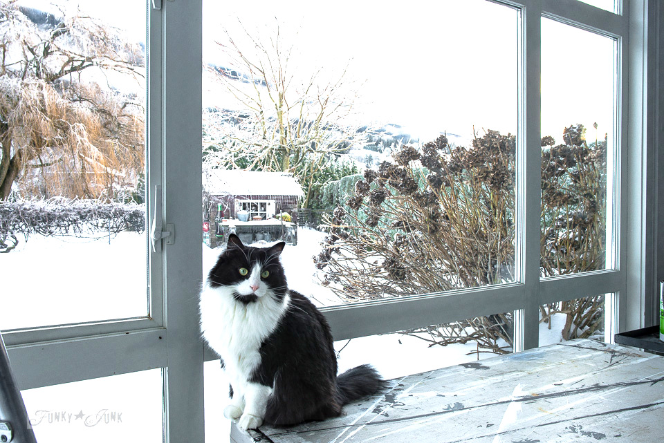 Black and white cat enjoying the snowy view outside the window | funkyjunkinteriors.net