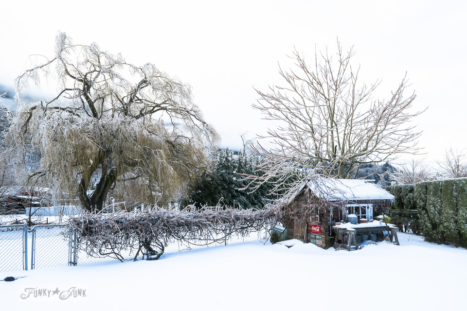 Snowy back yard and ice storm on a rustic shed in BC Canada \ funkyjunkinteriors.net