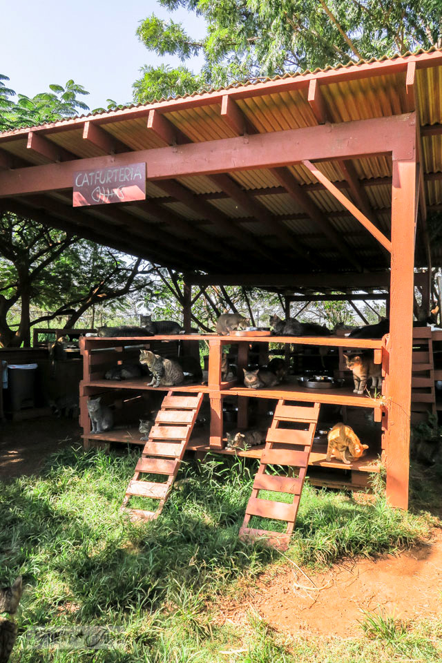 The Catfurteria out building that serves up meals at Lanai Cat Sanctuary in Hawaii, home of 800 cats.