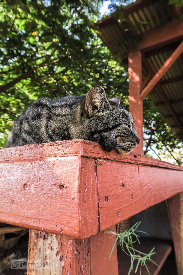 Lana'i Cat Sanctuary located in Lana'i, Hawaii