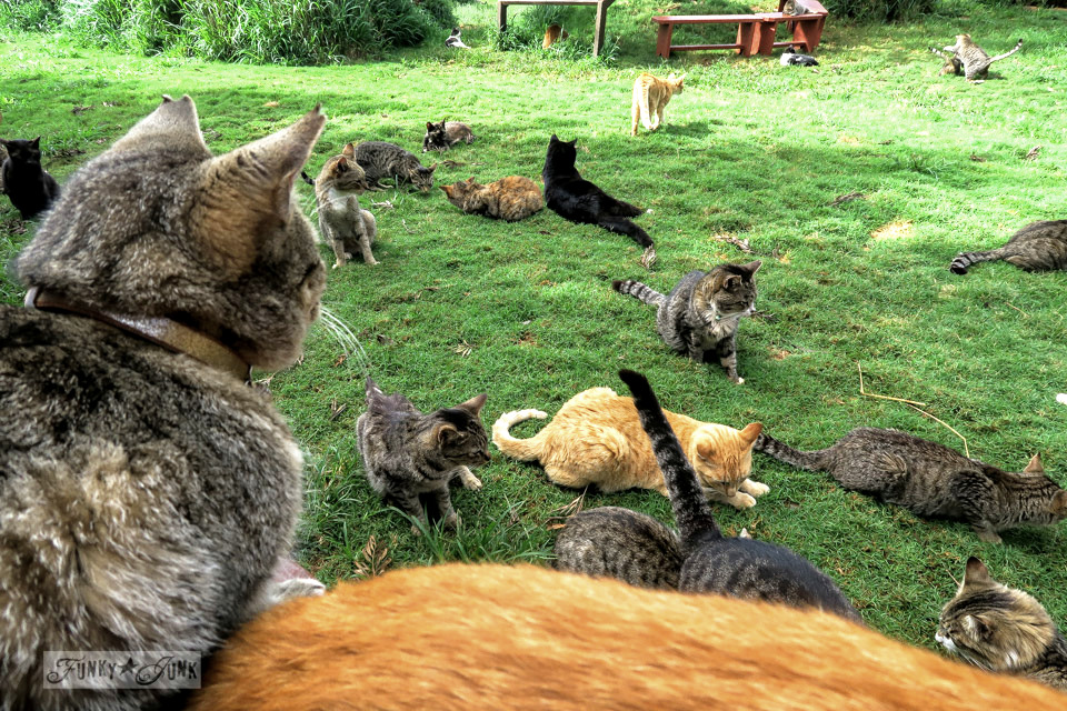 Kitty cat visits everywhere, especially when you share treats at the Lanai Cat Sanctuary in Hawaii
