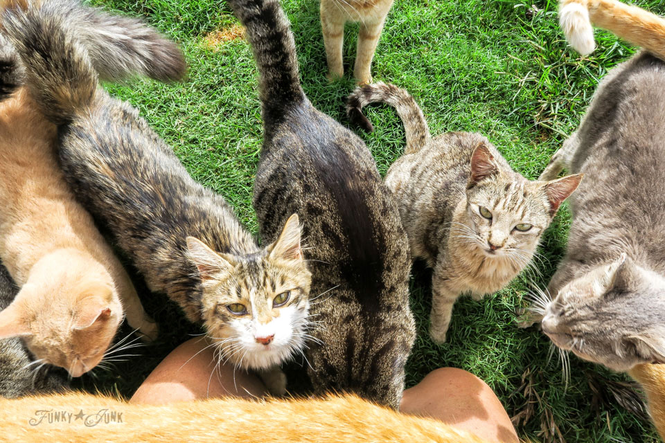 800 cats at the Cat Sanctuary on Lanai, Hawaii