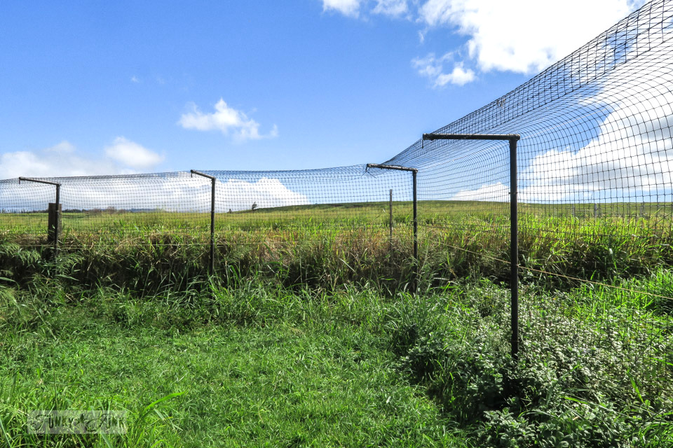The fencing around the Lanai Cat Sanctuary in Hawaii, home of 800 cats.