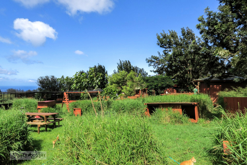 The lush grounds and buildings of the Lanai Cat Sanctuary in Hawaii, home of 800 cats.