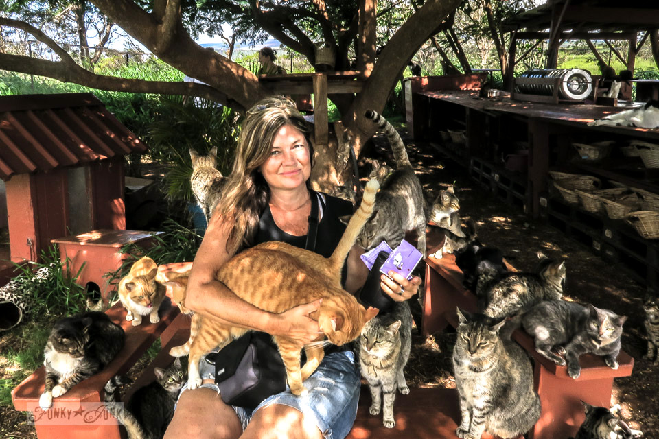 Funky Junk's Donna treating the cat guests at Lanai Cat Sanctuary in Hawaii, home of 800 cats.