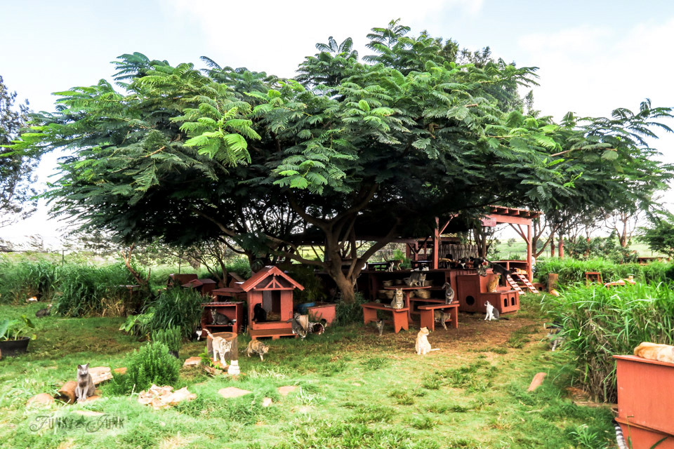 The large shade trees and out buildings of the Lanai Cat Sanctuary in Hawaii, home of 800 cats.