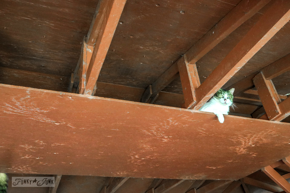 There are lots of buildings that showcase hiding places for the shy cats at Lanai Cat Sanctuary in Hawaii, home of 800 cats.