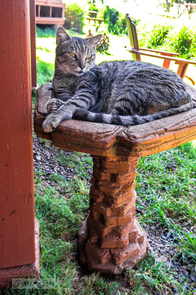 A cat all comfy snoozing in a bird bath at Lanai Cat Sanctuary in Hawaii, home of 800 cats.