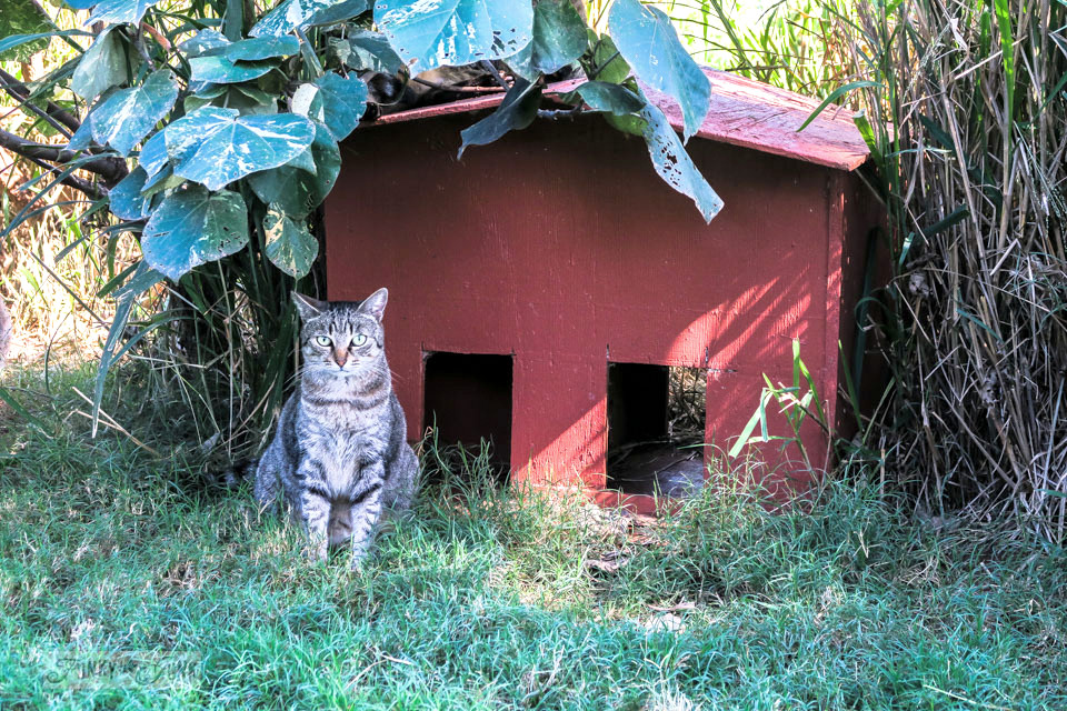 The little cat hiding places and buildings on pallets at Lanai Cat Sanctuary in Hawaii, home of 800 cats.