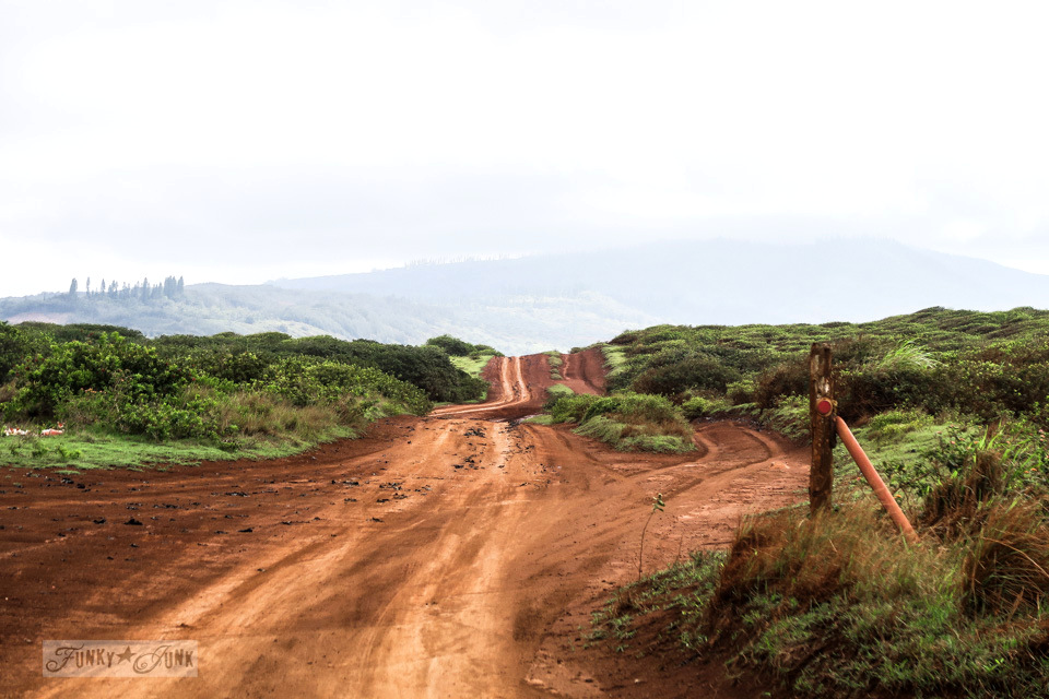 4x4 red soiled road conditions on the way to Garden of the Gods, a beautiful lunar landscape on the island of Lanai, Hawaii