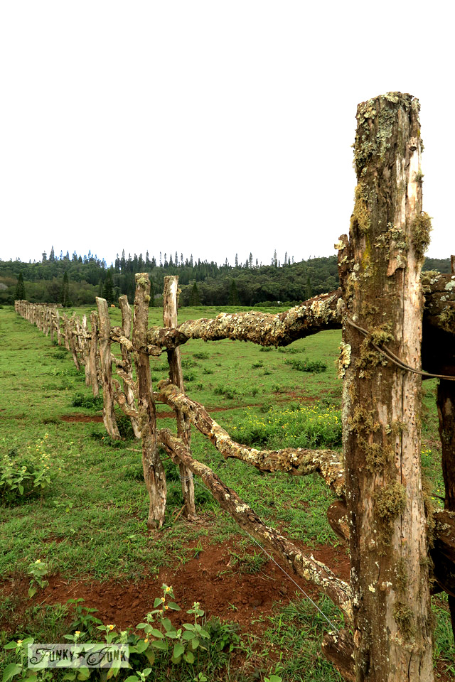 Rustic ranch fence made from branches along on the island of Lanai, Hawaii
