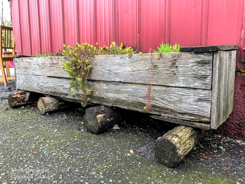 rustic reclaimed wood succulent window box planters on log bases at Rusty's in Harrison Hot Springs, BC