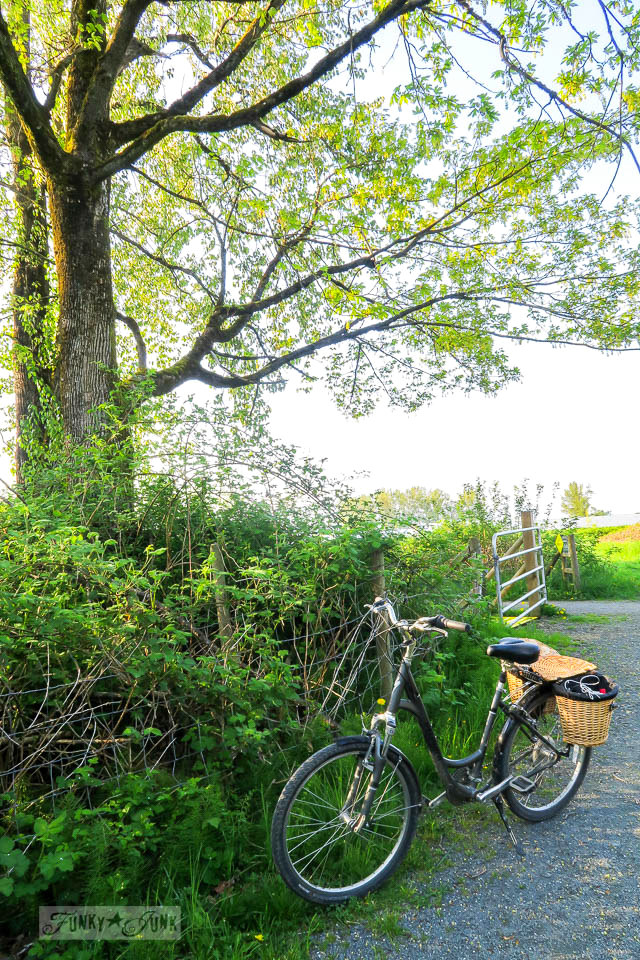 Biking past a hidden meadow that resembles a secret garden along the Vedder River Rotary Trail in Chilliwack, BC