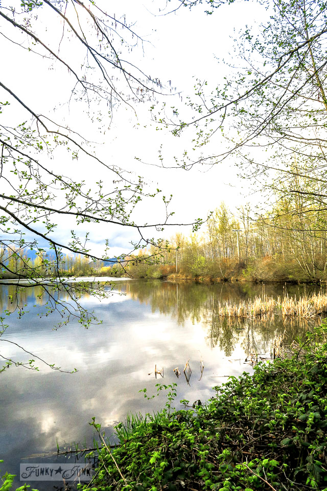 The Blue Heron Reserve shot from the Vedder River Rotary Trail in Chilliwack, BC