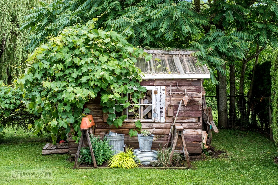 A simpler rustic garden shed for summer. A flowerbed full of green plants, and two sawhorses to hold up garden tools and clay pots.