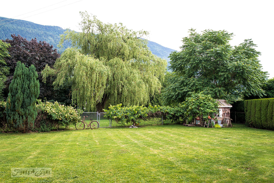 Established weeping willow tree and sumac as part of this natural mountain view backyard landscape with an old rusty bike and a rustic shed as the focal point.