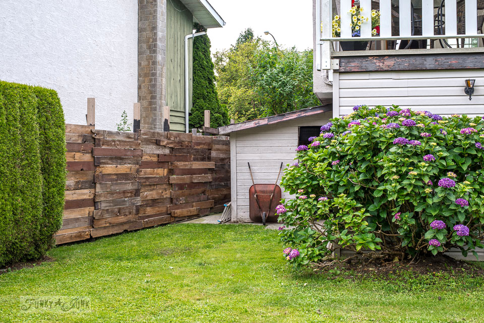 Reclaimed wood garden fence beside a purple blooming hydrangea bush