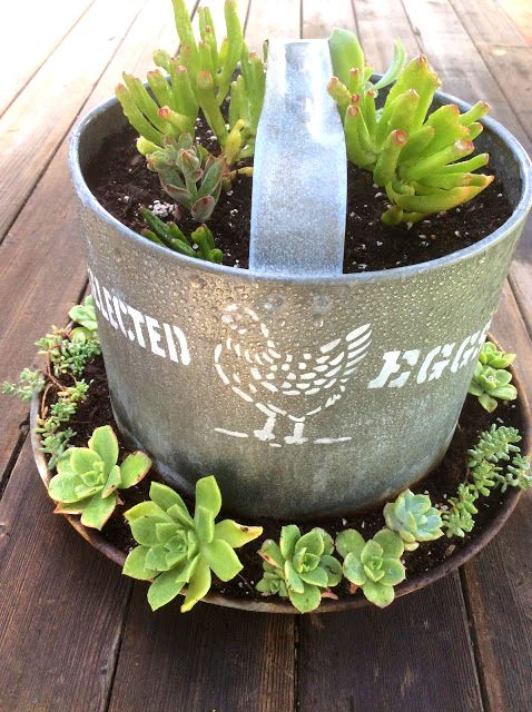 Stenciled chicken feeder succulent planter by Fresh Vintage By Lisa S, featured on Funky Junk Interiors