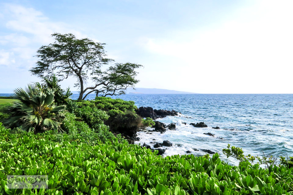 Taking in the stunning Wailea Beach Path, a gently winding flat paved path that circles along the ocean coast in Maui, Hawaii.