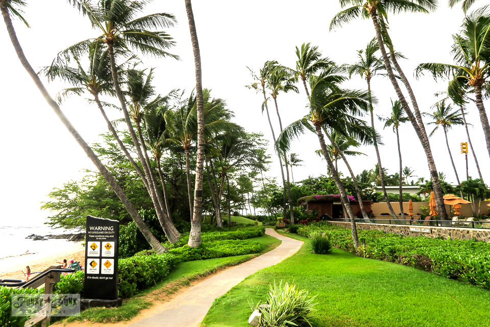 Taking in the stunning Wailea Beach Path, a gently winding flat paved path that circles along the ocean coast in Maui, Hawaii. Here is the Ulua Beach start.
