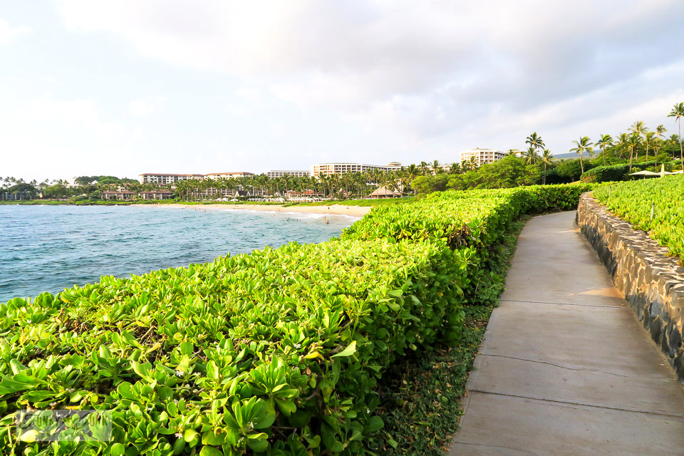 Taking in the stunning Wailea Beach Path, a gently winding flat paved path that circles along the ocean coast in Maui, Hawaii
