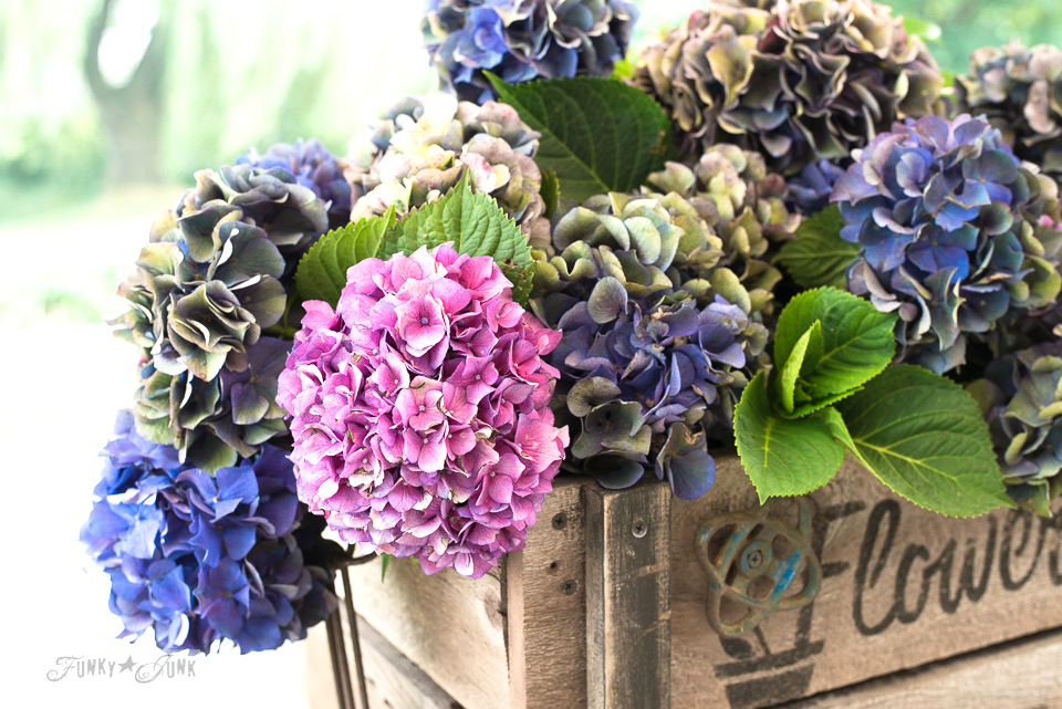 Multi-coloured hydrangea filled rustic DIY Flower Farm crate, with Funky Junk's Old Sign Stencils