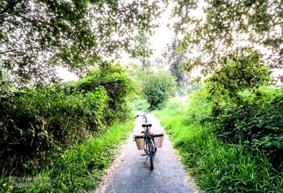 bike on the Vedder River rotary trail during summer
