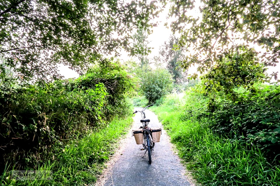 A lush forest summer bike ride on the Vedder River rotary trail
