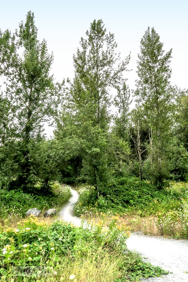 winding path into the forest along the Vedder River Rotary Trail in Chilliwack during summer
