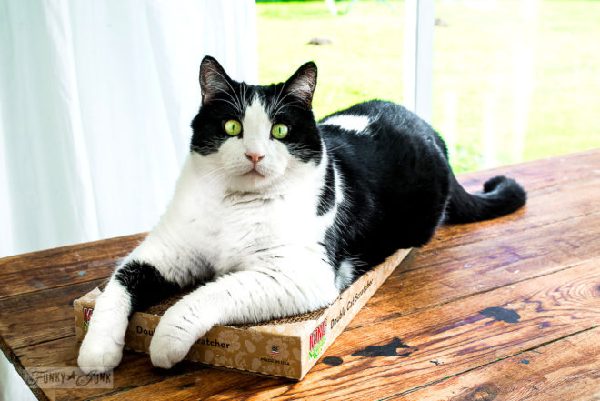Favorite cardboard cat scratchers - Kong Naturals Double Cat Scratcher - part of Valuable Cat Tips You May Not Know and their fav gear