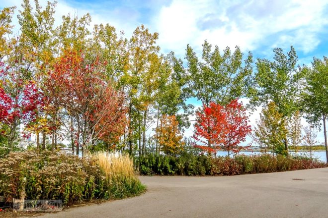 Beautiful fall foliage and trees at Ontario Place park during a fall trip to Toronto, Ontario, Canada