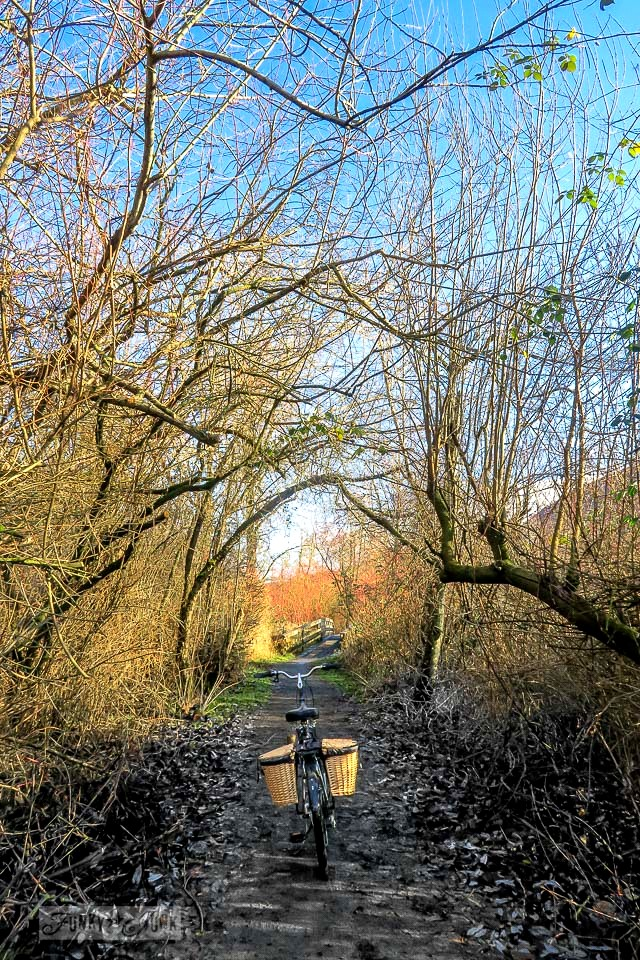 A trail leading under a branch arbour - A Christmas bike ride along the Vedder River Rotary Trail in Chilliwack BC.