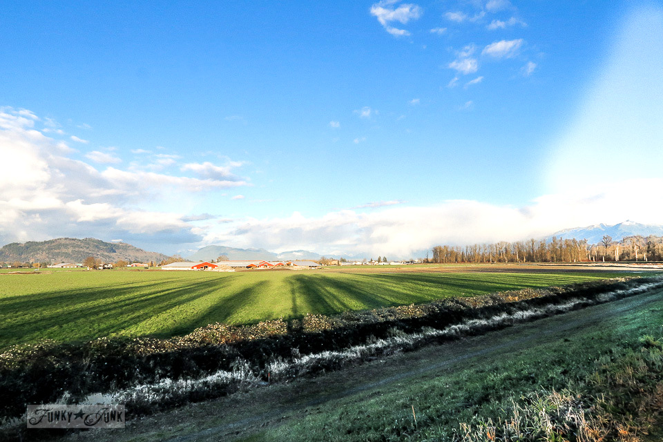 The farmland from the river dike - A Christmas bike ride along the Vedder River Rotary Trail in Chilliwack BC.