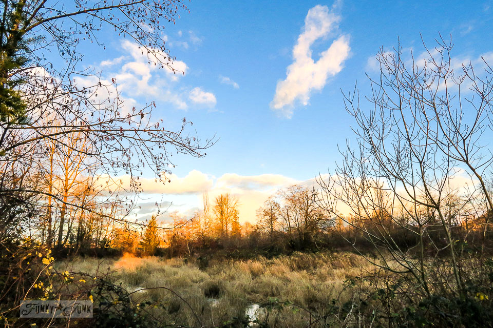The grassy wetlands against a vibrant blue sky - A Christmas bike ride along the Vedder River Rotary Trail in Chilliwack BC.