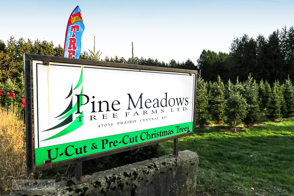 Finding 'the one' at the Christmas tree farm - Pine Meadows Tree Farm in Chilliwack, BC Canada