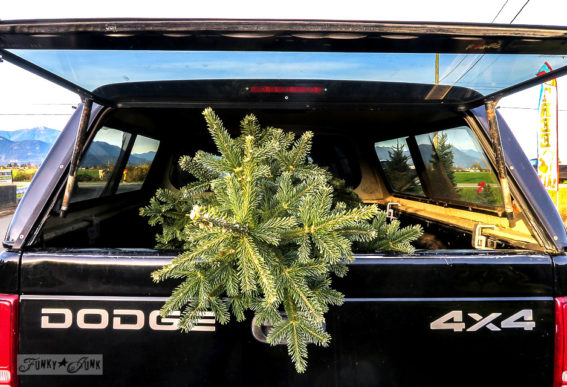 Bringing the Christmas tree home in the Dodge truck