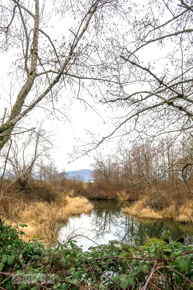 Winter wetlands during a bike ride along the Vedder River Rotary Trail in Chilliwack, BC Canada