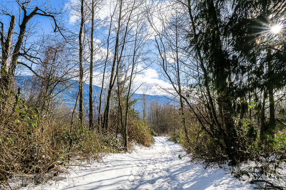 A meandering walk during a snowfall at the Vedder River Rotary Trail in Chilliwack, BC Canada.