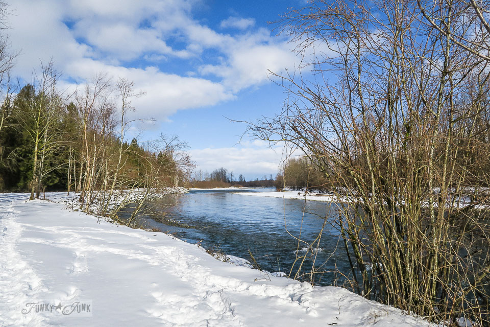 A a meandering walk along the Fraser River during a snowfall at the Vedder River Rotary Trail in Chilliwack, BC Canada.