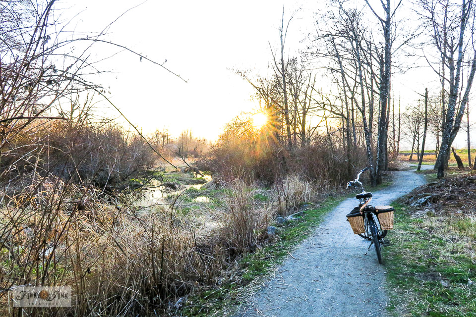 The wetlands at sunset during a winter and spring bike ride along the Vedder River Rotary Trail in Chilliwack, BC Canada